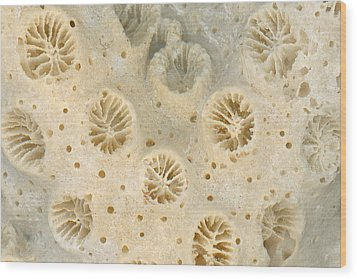 Shell - Conchology - Coral Wood Print by Mike Savad