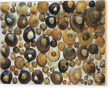 Shell Background Wood Print by Carlos Caetano