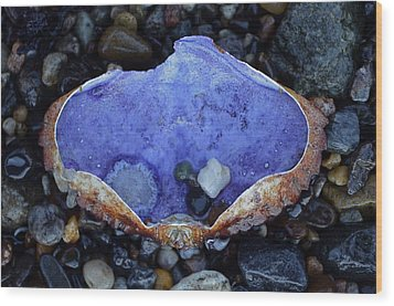 Shell Dish Wood Print by Anna Bree