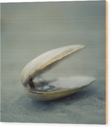 Shell Wood Print by Jill Ferry Photography