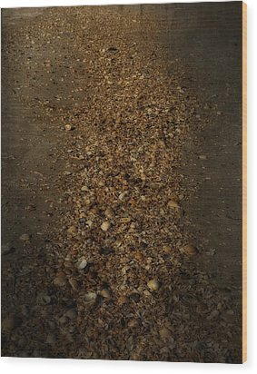 Shell Road Wood Print by Mario Celzner