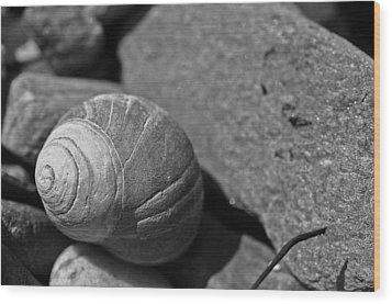 Shells II Wood Print by David Rucker