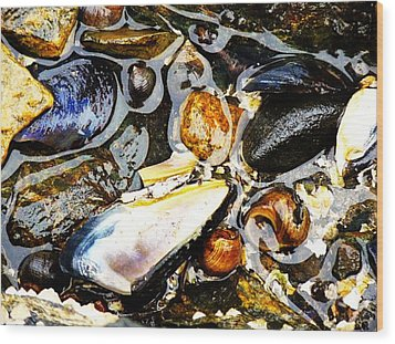 Wood Print featuring the photograph Shells by Kelly Reber