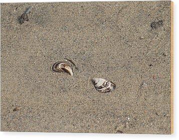 Shells On A Beach Wood Print by Rebecca Frank