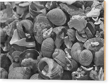 Shells V Wood Print by David Rucker