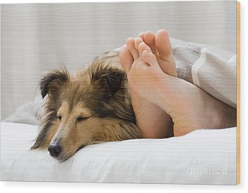 Sheltie Sleeping With Her Owner Wood Print