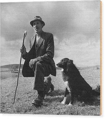 Shepherd Wood Print by Bert Hardy