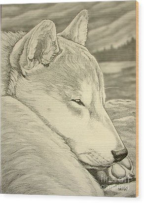 Shiba Inu Wood Print by Kim Hunter