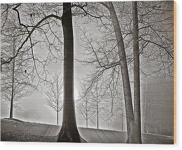 Shining Light Wood Print