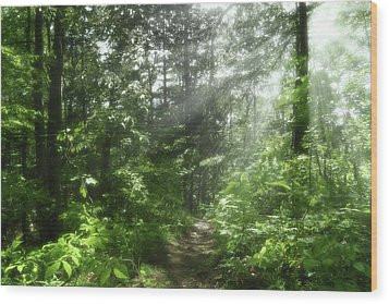 Wood Print featuring the photograph Shining Through by Anthony Rego