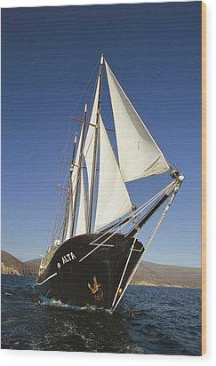 Ship Sailing Through The Galapagos Wood Print by Steve Winter