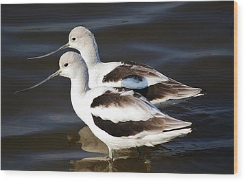 Shore Birds Wood Print by Paulette Thomas