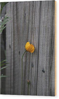 Shy Wood Print by Elizabeth Sullivan