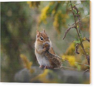 Shy Little Chipmunk Wood Print
