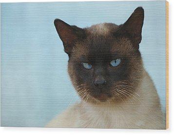 Siamese Cat Wood Print by Waldek Dabrowski