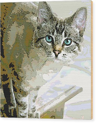 Siamese Mix Kitten Wood Print by Dorothy Walker