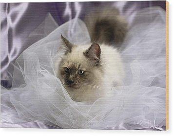 Siberian Kitty On Lilac Wood Print by Raffaella Lunelli