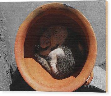 Siesta 2 Wood Print by Xueling Zou