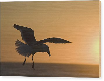 Silhouette Of A Seagull In Flight At Wood Print by Michael Interisano