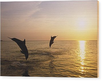 Silhouette Of Bottlenose Dolphins Wood Print by Natural Selection Craig Tuttle
