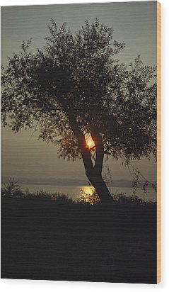 Silhouette Of Willow Tree At Sunset Wood Print by Al Petteway