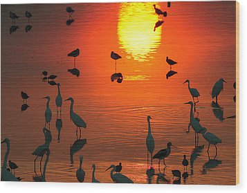 Silhouetted Wading Birds Feed Wood Print by George Grall