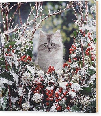 Silver Tabby Kitten Wood Print by Jane Burton