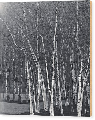 Silver Trees Wood Print by Lenny Carter