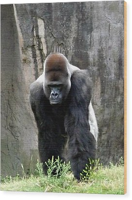 Wood Print featuring the photograph Silverback by Jo Sheehan
