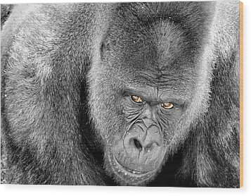Wood Print featuring the photograph Silverback Staredown by Jason Politte
