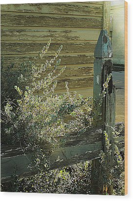 Wood Print featuring the photograph Silverleaf In Morning Sun by Louis Nugent