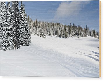 Silverstar Meadow Snow Covered Alpine Meadow Silver Star Wood Print by Andy Smy