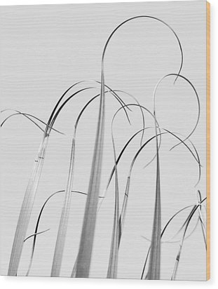 Silvery Soaring Slivers Of Grass Wood Print by Lynn Wohlers