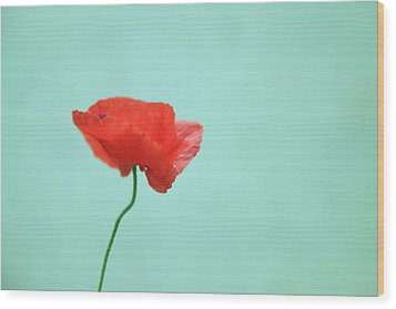 Simple Red Poppy On Turquoise Blue Wood Print by Poppy Thomas-Hill