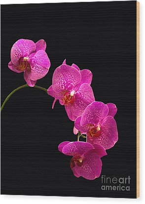 Wood Print featuring the pyrography Simply Beautiful Purple Orchids by Michael Waters