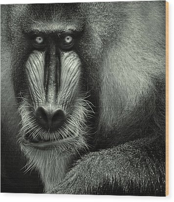 Singapore Zoo, Mandrill Wood Print by By Toonman