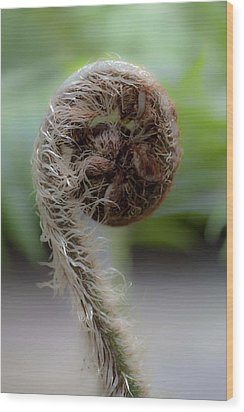 Wood Print featuring the photograph Single Frond by Carole Hinding