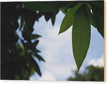 Single Mango Leaf Silhouetted Against The Sky Wood Print by Anya Brewley schultheiss