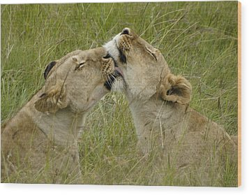 Sisterly Love Wood Print by Michele Burgess