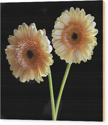 Sisters. Wood Print by Terence Davis