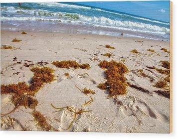 Sitting On The Beach Wood Print by Toni Hopper