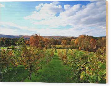 Six Miles Creek Vineyard Wood Print by Paul Ge