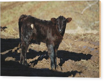 Sizing Me Up Wood Print by Cheryl Helms