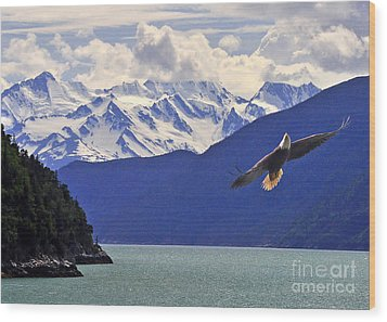 Skagway Bald Eagle Wood Print