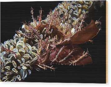 Skeleton Shrimp And Mussels Wood Print by Alexander Semenov