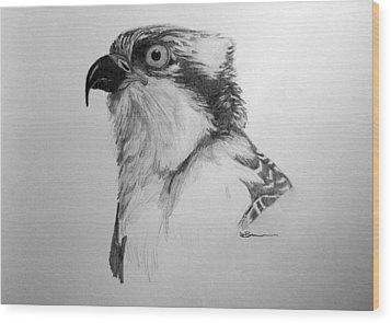 Sketch Of An Osprey Wood Print by Leslie M Browning