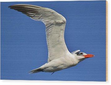 Skimmer In Flight Wood Print by Paulette Thomas