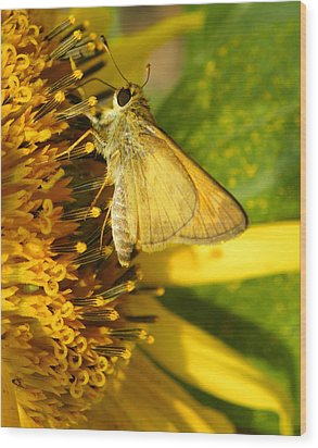 Skipper And Sunflower Wood Print by Sandi OReilly
