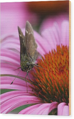 Skipper Butterfly Wood Print by Juergen Roth