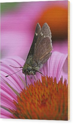 Skipper Moth Macro Photography Wood Print by Juergen Roth